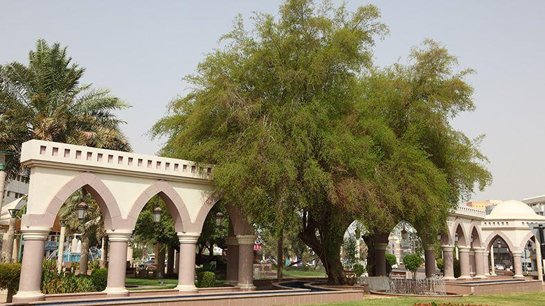 Al Ain - See Dubai Tours