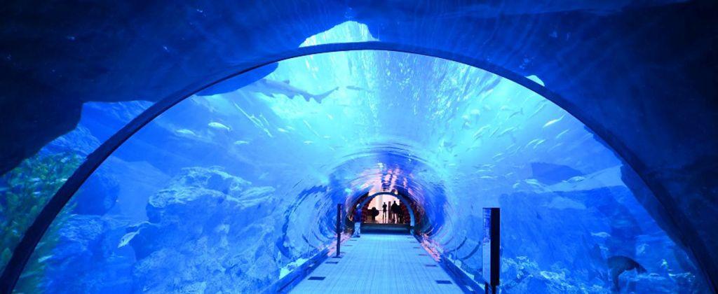 Dubai-Aquarium-01-1024x420