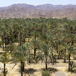 See Dubai Tours - Oasis Masafi