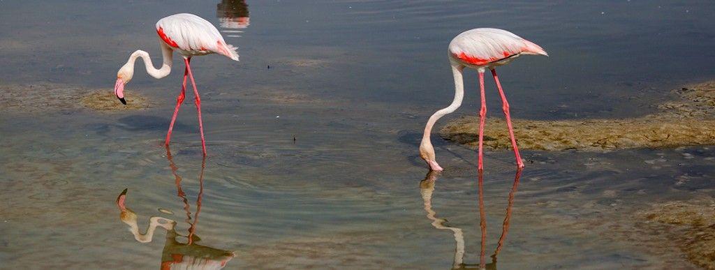 See Dubai Tours - Zoologico - Santuario Animales