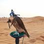 Espectáculo de halcones