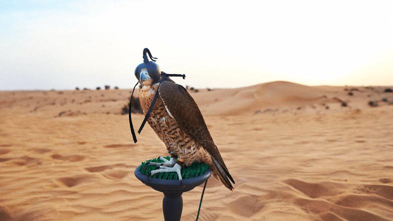 Espectáculo Halcones - See Dubai Tours - Desierto Dubai