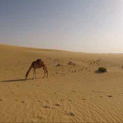 Desierto Al Khatim -See Dubai Tours